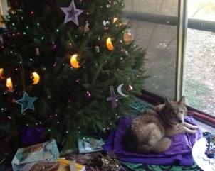 Stella under tree